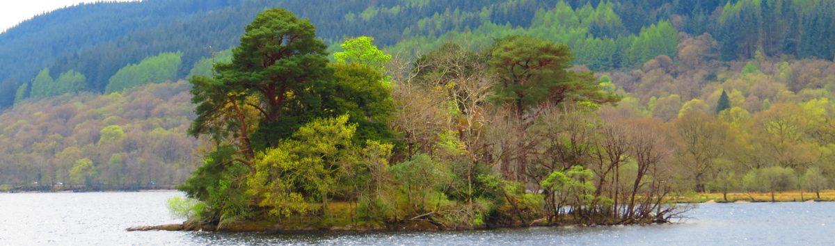 Splendid Trees